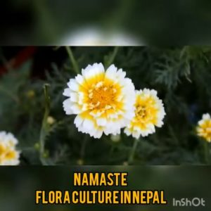 flora culture in Nepal(YouTube)