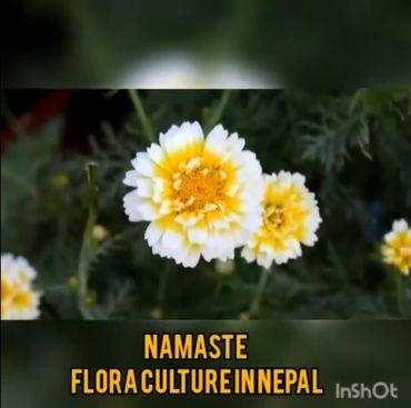 ネパールから花の紹介(YouTube)