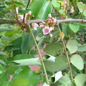 花の名前を教えてください②(カンボジア)