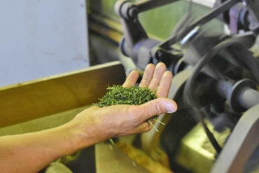 楠クリーン村:2020お茶収穫加工の終わり