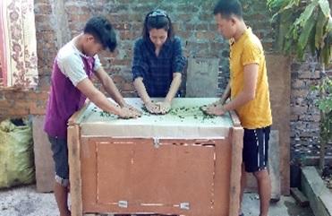 煎茶の工程(ミャンマー)